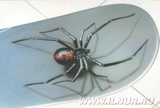 Spider сноуборд 2000 г.