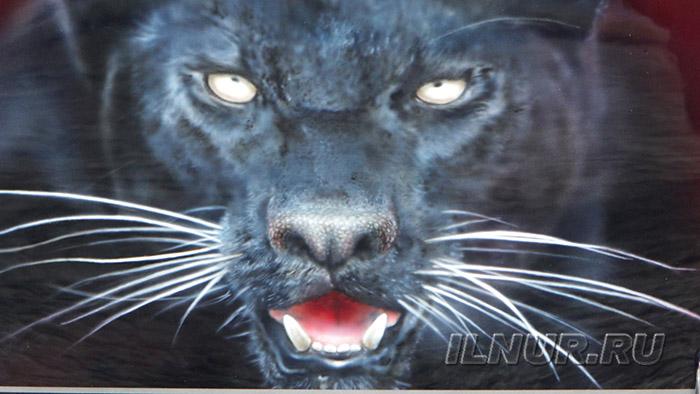airbrush black kat